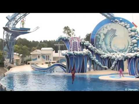 The Complete SeaWorld  Blue Horizons  Dolphin Show  2016   California Travel Destinations.