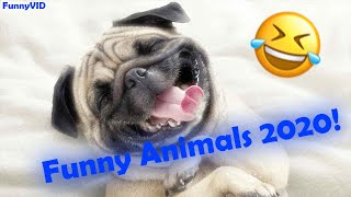 CUTE AND FUNNY ANIMALS 2020!