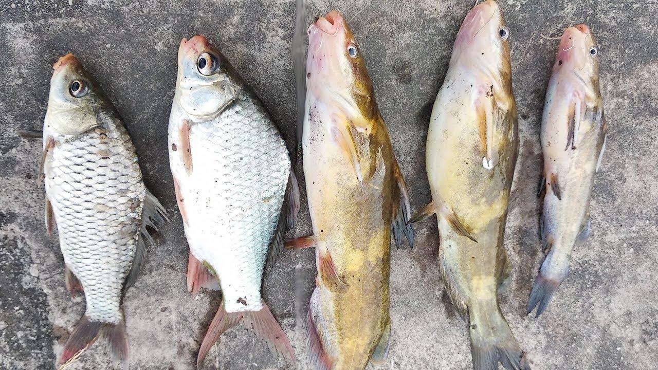 Câu Cá Mùa Đông, Câu Cá Nheo Cá Bò Sông Tự Nhiên (River Fishing)   Câu Cá Vui