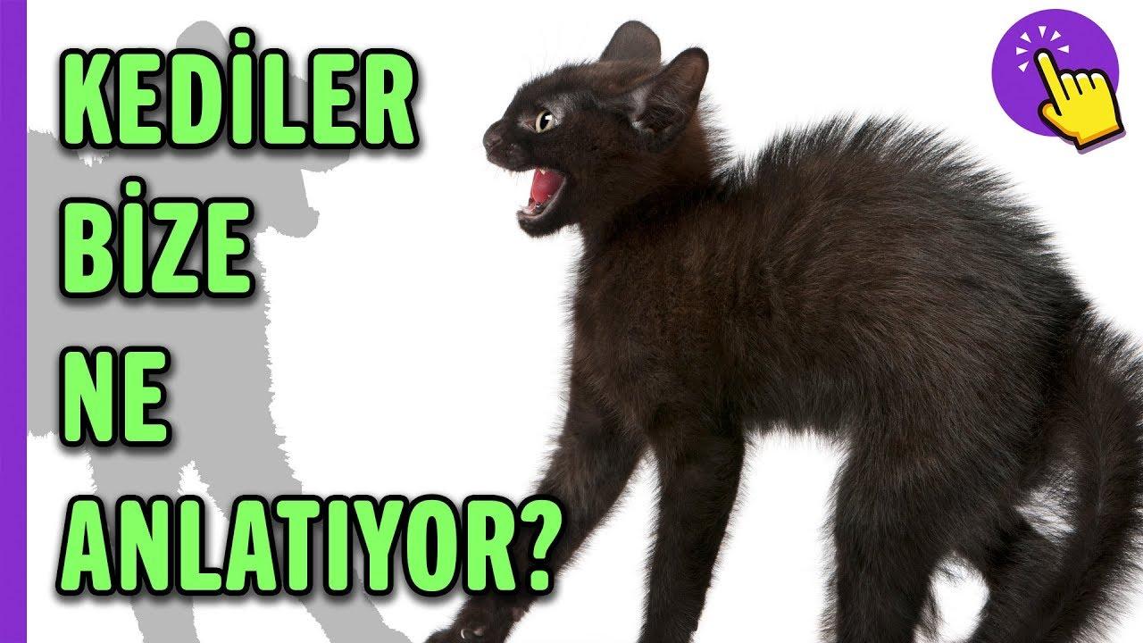 Kedilerin davranışları ne anlatıyor? |  Hayvanlar Alemi | Aklında olsun