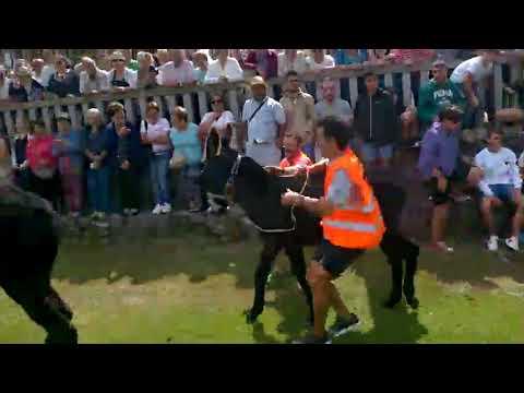 Os burros, outra véz á carreira en Escairón