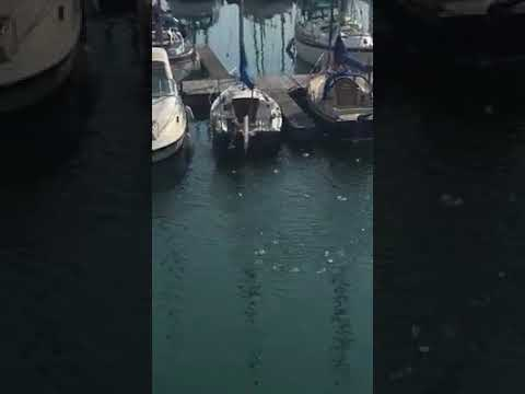 Crazy Fishes in Marina
