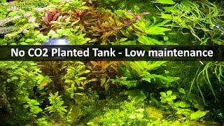 no co2 planted tank   low maintenance aquarium