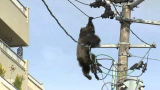 Cứu tinh tinh trèo lên cột điện ở Nhật Bản