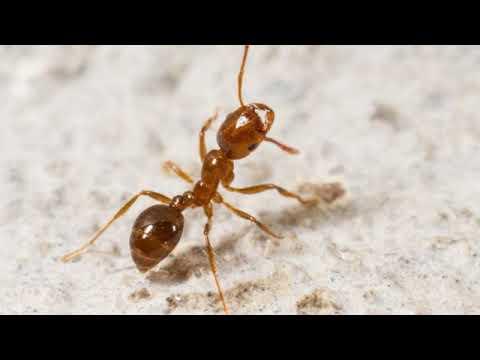 problem-pests-|-fairfax,-va---pmsi