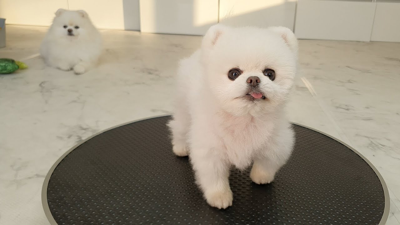 짧뚱 긴뚱 강아지의 신체검사