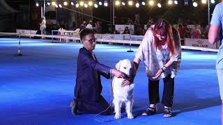 IDS Asia Winner 2019. 3 day. Международная выставка собак Азия Виннер