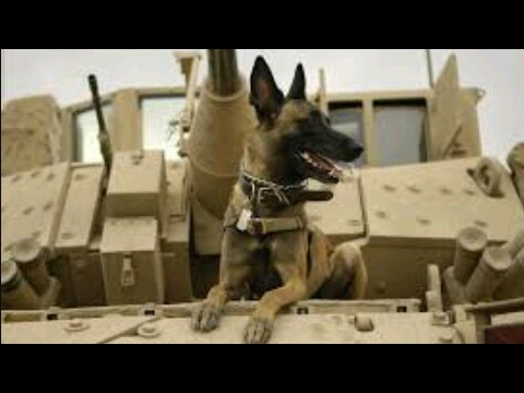 Belgian Military Power/Special Forces|2017-HD~Not Gonna Die~