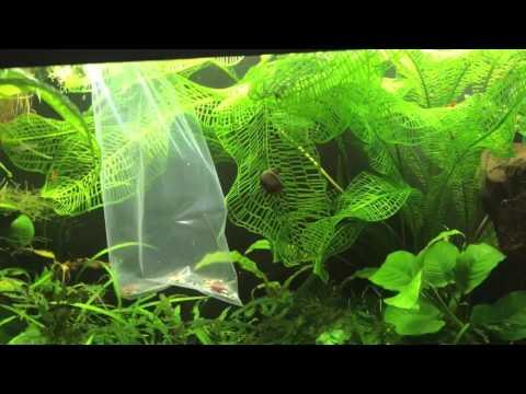 Self Sustaining 55 Gallon Jungle Aquascape Update