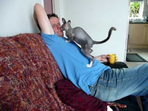 Pabs the sphynx hairless cat, nuzzling Brian