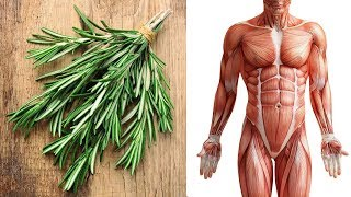 Health Benefits of Rosemary Effective Home Remedies