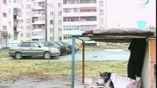 Хатико в России