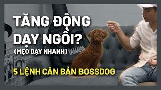 Mẹo dạy chó Ngồi nằm - Áp dụng cún tăng động | Huấn luyện chó cơ bản BoṡṡDog (BOSS290719)