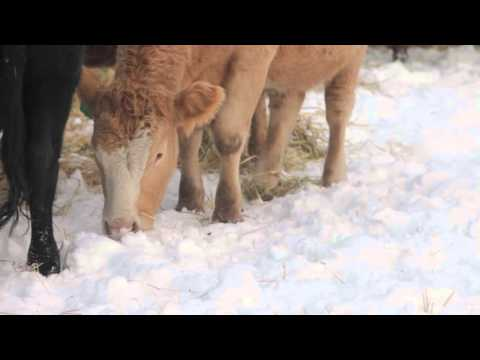 Winter Grazing Systems: Winter Watering