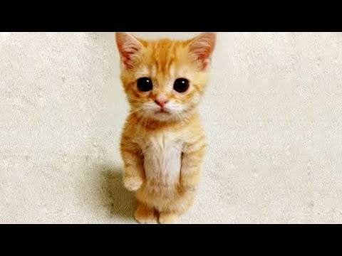 Funny Animals Compilation 2020 - Cutest Animals Ever
