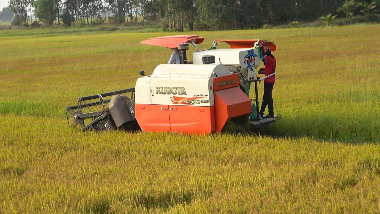 កសិករប្រមូលផលស្រូវ | Rice Harvester in Khmer | Rice Crop Cutting Machine