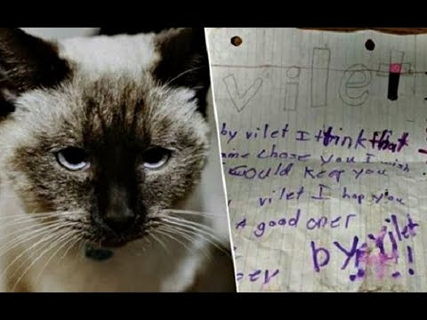 Кошечку нашли с запиской на шее. Никто в приюте не мог сдержать слез, читая эту записку...