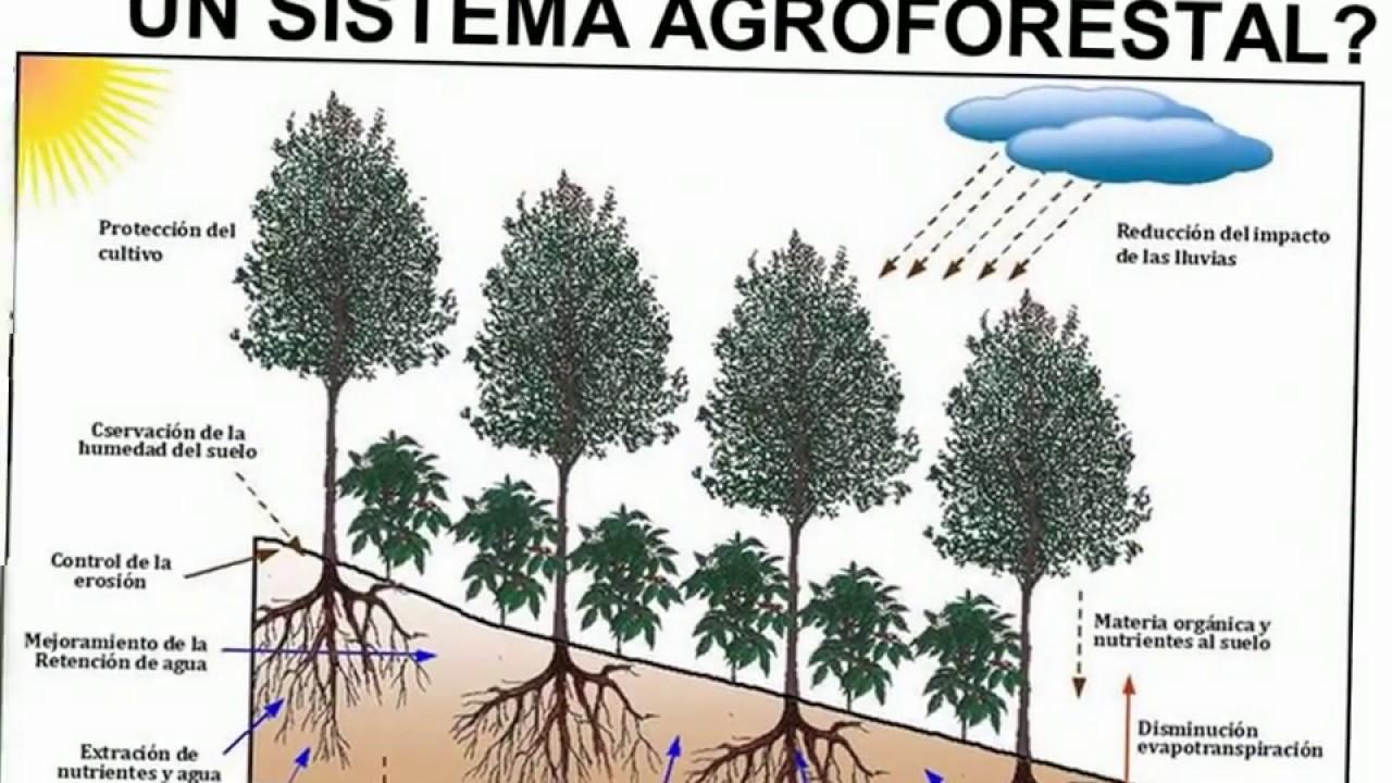 Sistemas agroforestales en el cultivo de cafe youtube - Aparato para la humedad ...