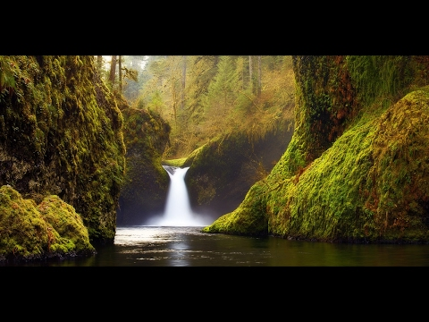 """Relaxing Music: Peaceful Music, Instrumental Music, """"Nature's Sanctuary"""" by Tim Janis"""
