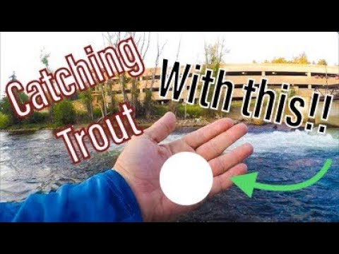 Catching Trout In Estes Park - Using Spinning Gear‼️