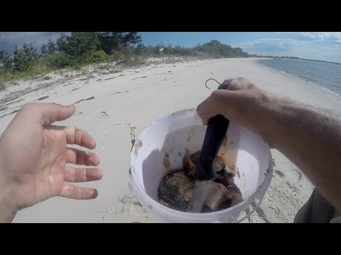 How To Bait fish HOW I EXPLORE Saltwater Surf Fishing Clam & Bunker