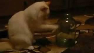 Кот моет банку.avi