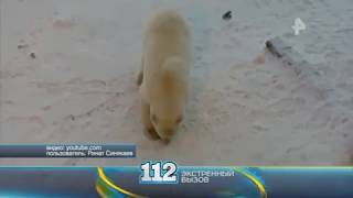 Видео  строитель чуть не стал добычей белого медведя