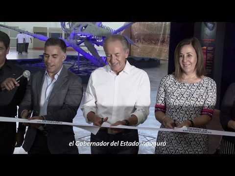 Inaugura JMCL Museo Itinerante Tierra de Dinosaurios