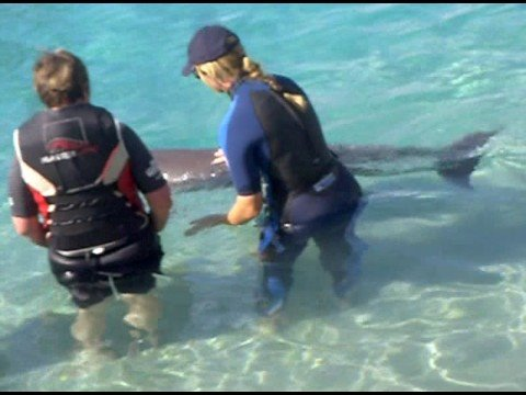 Dolphin in Ocean World