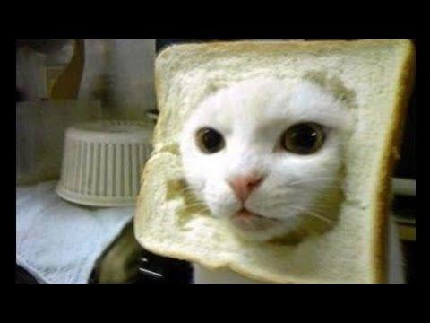 Funny Videos 2014 : Funny Cats - Funny Cat Videos - Funny Animals Fail Compilation 2014
