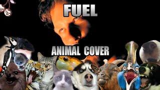 Metallica - Fuel (Animal Cover)