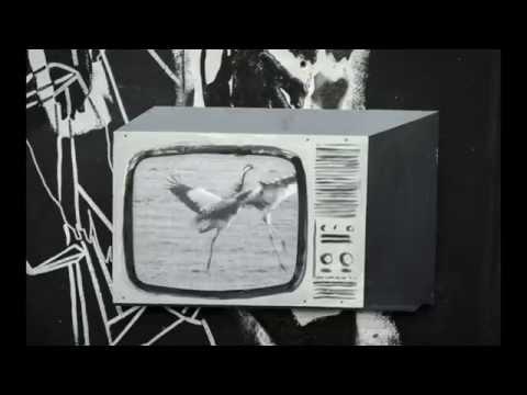Monkey Safari - Cranes [Official Video]