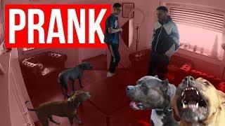 Hunde Prank geht SCHIEF -.-    Fatih Brate + FaxxenTV