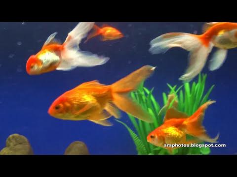 Government Aquarium (Bangalore Aquarium) Second Largest In India | Bengaluru, Karnataka