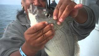 Fall Porgy Fishing on the Black Hawk