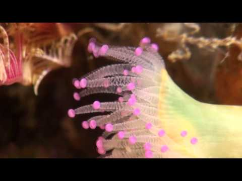 Diving with Aquaventures, Baltimore, Cork, Ireland - Jerome McCormick