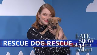 The Late Show 'Rescue Dog Rescue' With Emma Stone