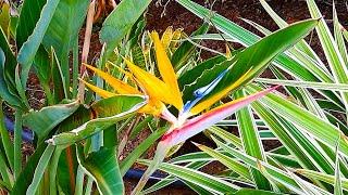Растения Кипра Обзор территории отеля