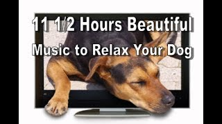 Nearly 11 1/2 Hours of a Beatiuful Video Music Compilation to Relax Your Dog or Puppy