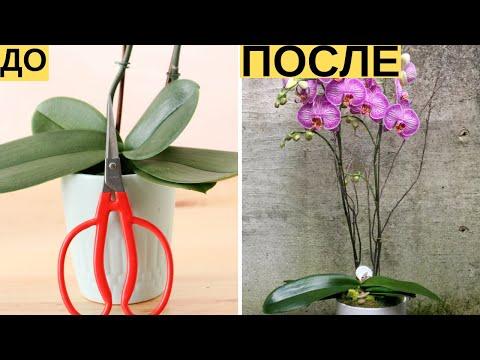И Ваша орхидея будет цвести круглый год. 7 важных секретов по уходу за орхидеями | Я знаю