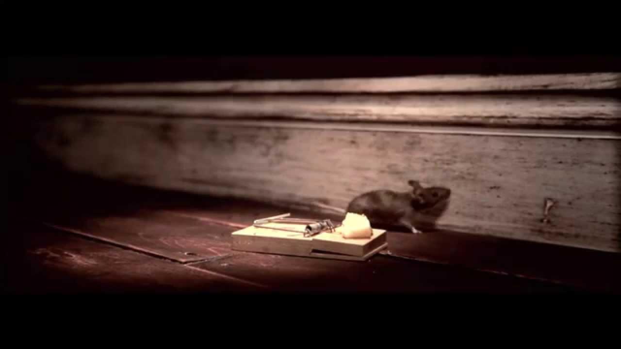 nolans cheese mouse trap