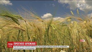 Експерти розповіли про наслідки посухи для українського врожаю