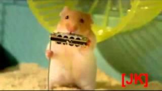 Koncert Chomików (Concert Hamster)