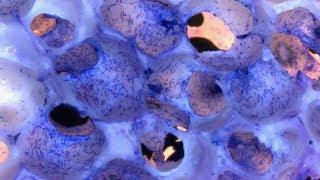 Communiquer avec les cellules souche