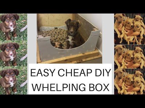 Easy. Cheap. Diy. Whelping Box Plus PUPPY UPDATE