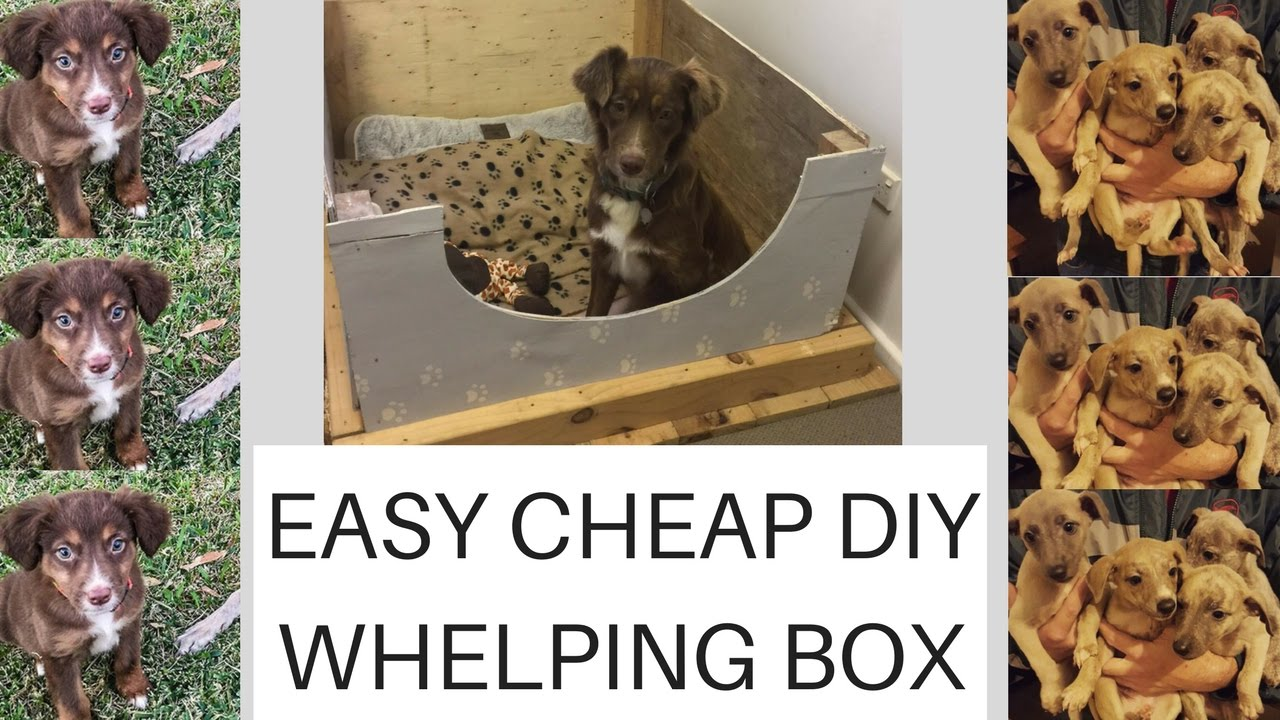 Easy Cheap Diy Whelping Box Plus Puppy Update Youtube