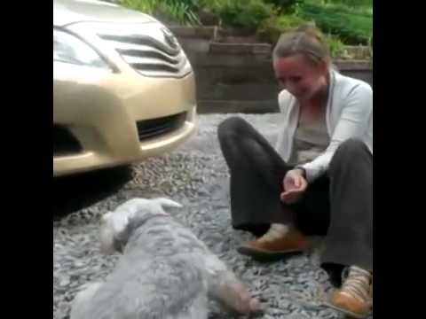 Dog Passes Out From Joy After Owner Comes Home After Years YouTube - Dog passes owner returns 2 years