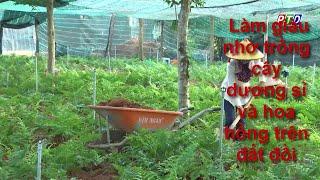 Làm giàu nhờ trồng cây dương xỉ và hoa hồng trên đất đồi