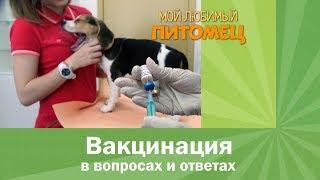 Когда делать вакцинацию щенкам и котятам.