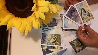 Piscis Relaciones Febrero 14 al 28 Haz limpieza!!!Mariposa Moonarca Tarot